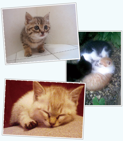 猫の避妊と去勢の会